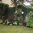 Newly planted border for Teddington garden