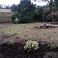 Garden in Ham after clearing and replanting - lawn still needs sorting out!