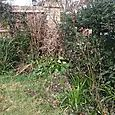 Front garden clearance
