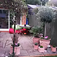 Terrace with new pots planted up