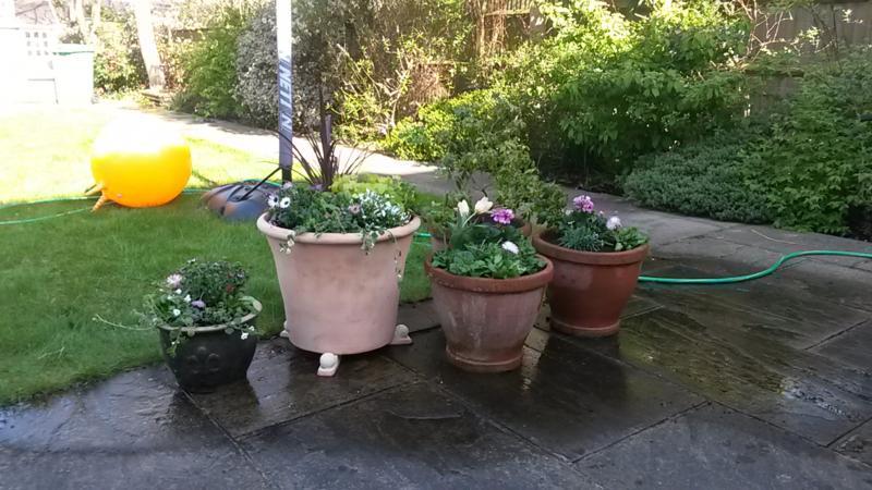 Nina's garden after 2