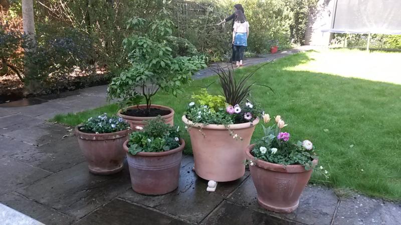 Nina's garden after 1