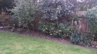 Kaari's garden before 2