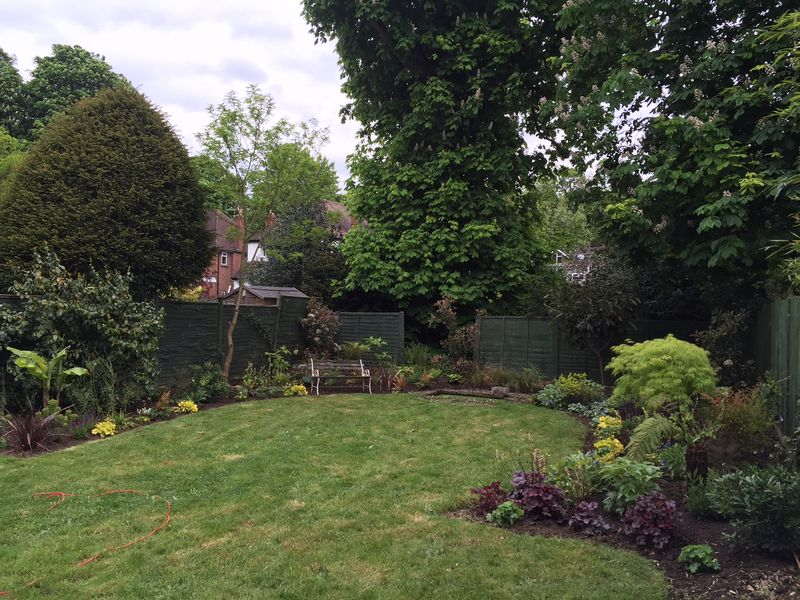Kate's Garden May 2016 3