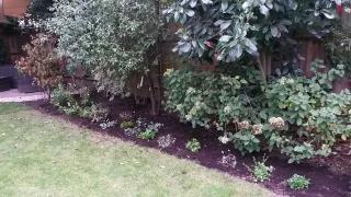 Kaari's garden after 7