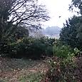 Garden in Ham, before clearing!