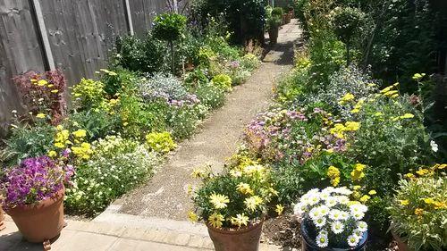 Chantal's garden summer 2015