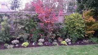 Kaari's garden after 4