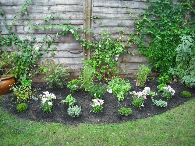 Small border planting for garden in Teddington