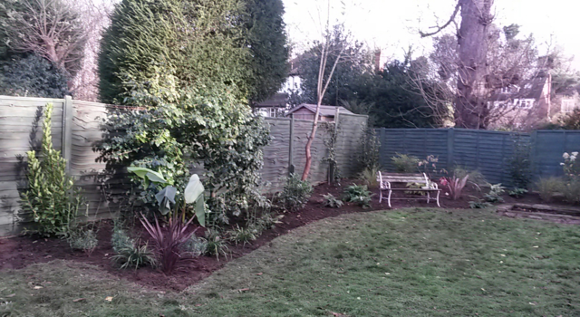 Newly created border, planted up with semi 'tropical' looking plants