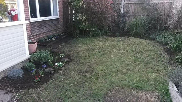 Teddington front garden, after clearing/replanting