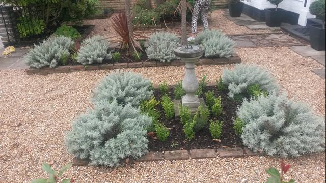 Twickenham front garden